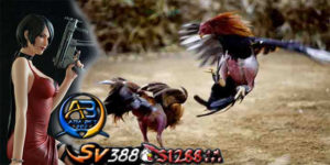 Agen Sabung Ayam S128